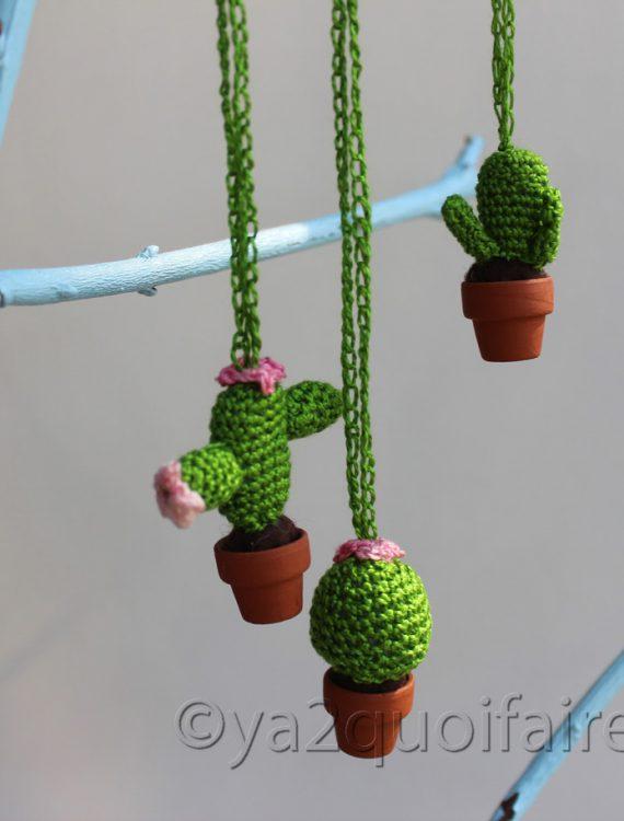 collier cactus assort